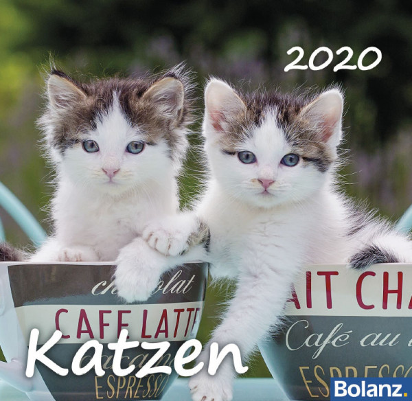Katzen 2020 - Tischkalender