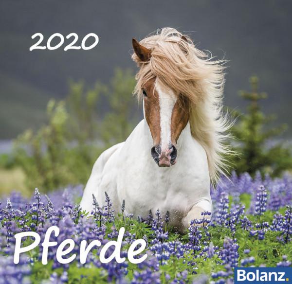 Pferde 2020 - Tischkalender