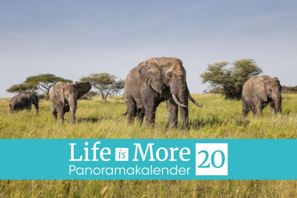 Life-is-More 2020 - Panoramakalender