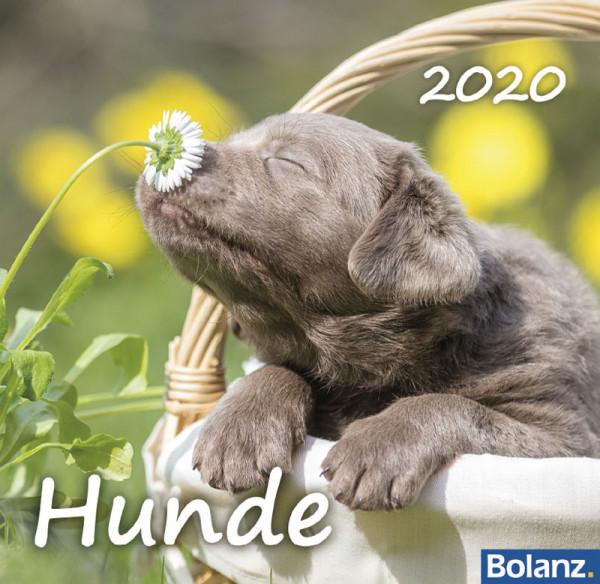 Hunde 2020 - Tischkalender